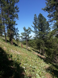Hiking a steep trail in the Big Horn Mountains