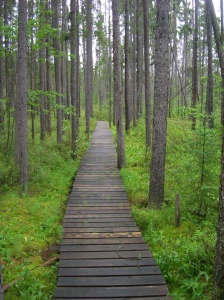 Esker-Lakes-hiking-trail (2)